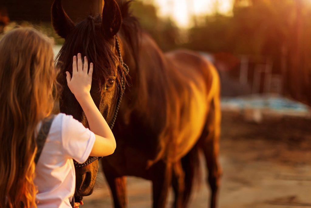 Reiten, Pferd, Westernreiten, welcher Sattel