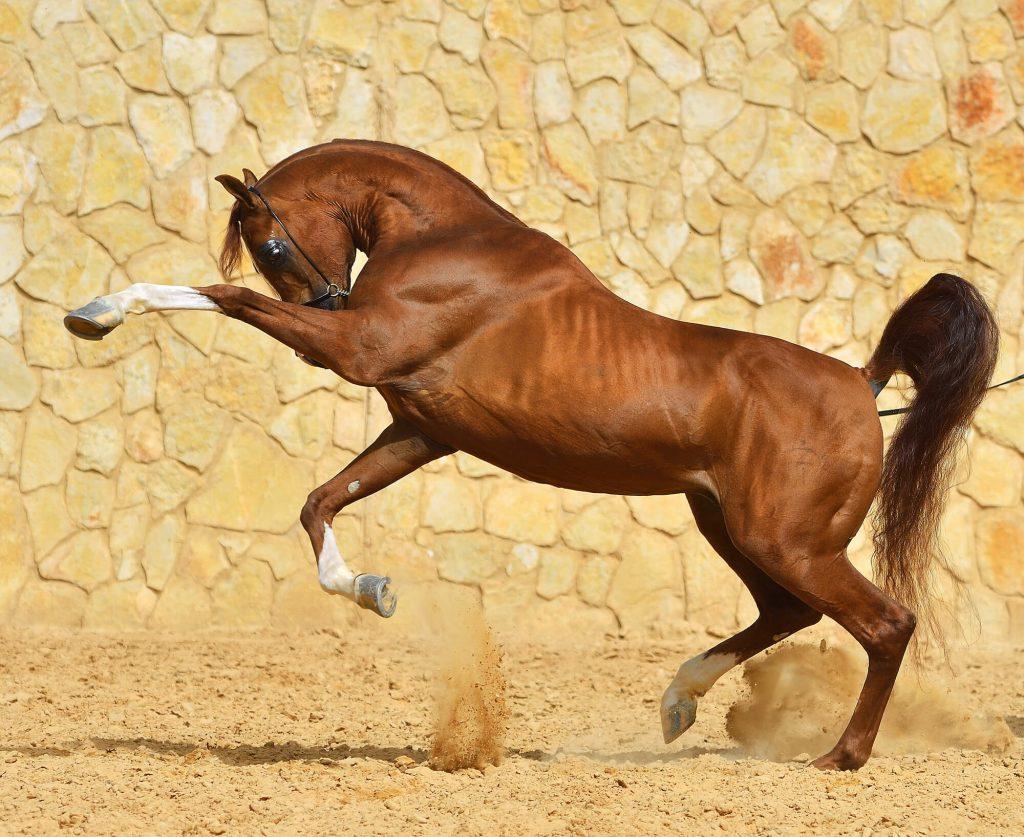schöne Pferdenamen für einen Hengst