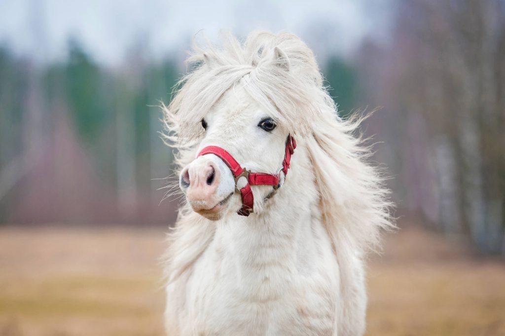 schöne Pferdenamen für Ponys
