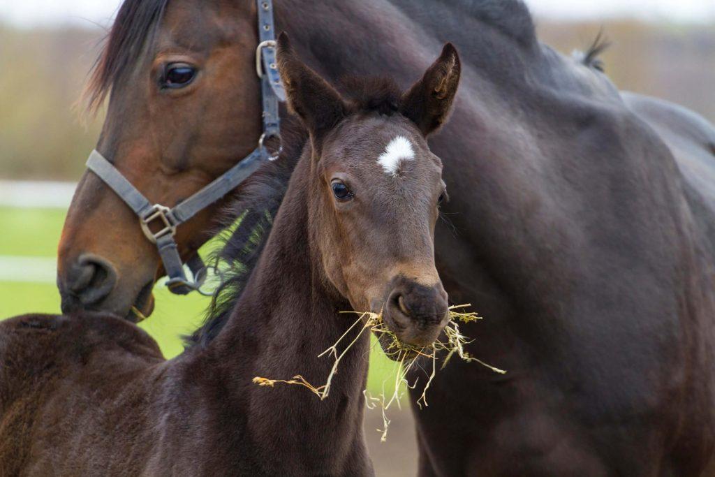 Schöne Pferdenamen für Stuten