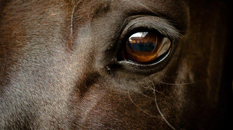Anregungen für schöne Pferdenamen, Hengstnamen und Stutennamen
