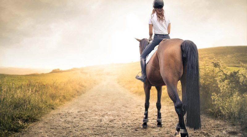 Reiten lernen - So reitest du richtig Schritt
